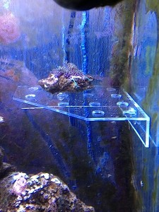 Large Clear Corner 13 Plug Frag Rack